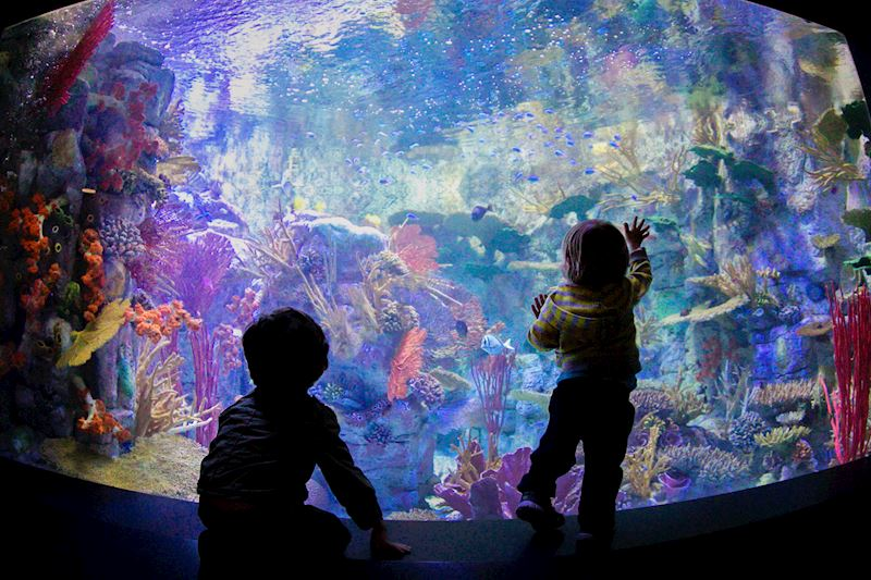 Explore The Ocean Up Close at The Aquarium at La Jolla