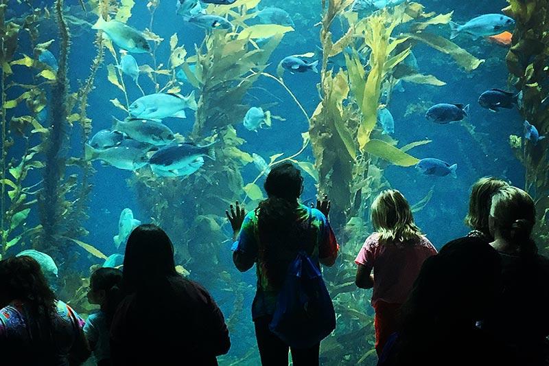 Explore The Ocean Up Close at The Aquarium at La Jolla