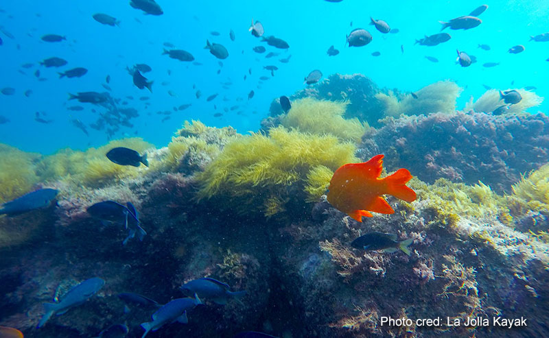 An underwater look at different types of fish swimming around coral and seaweed