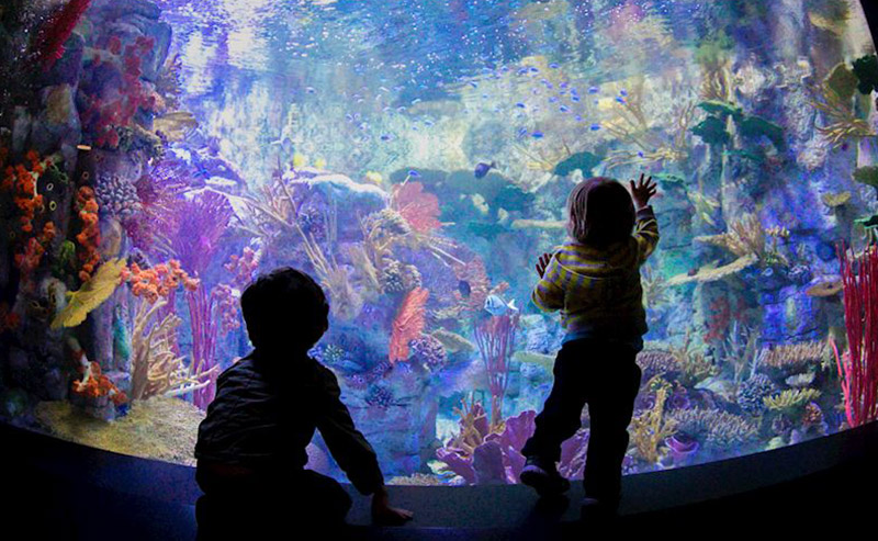 Two kids looking at the colorful marine life up-close at Birch Aquarium.