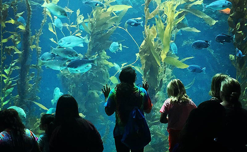 Kids looking at marine life swim around in an exhibit at Birch Aquarium