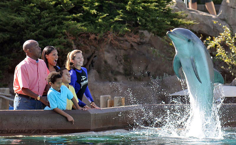 A family of four watching a dolphin jump out of the water