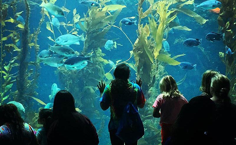 Kids looking at marine life at the Birch Aquarium