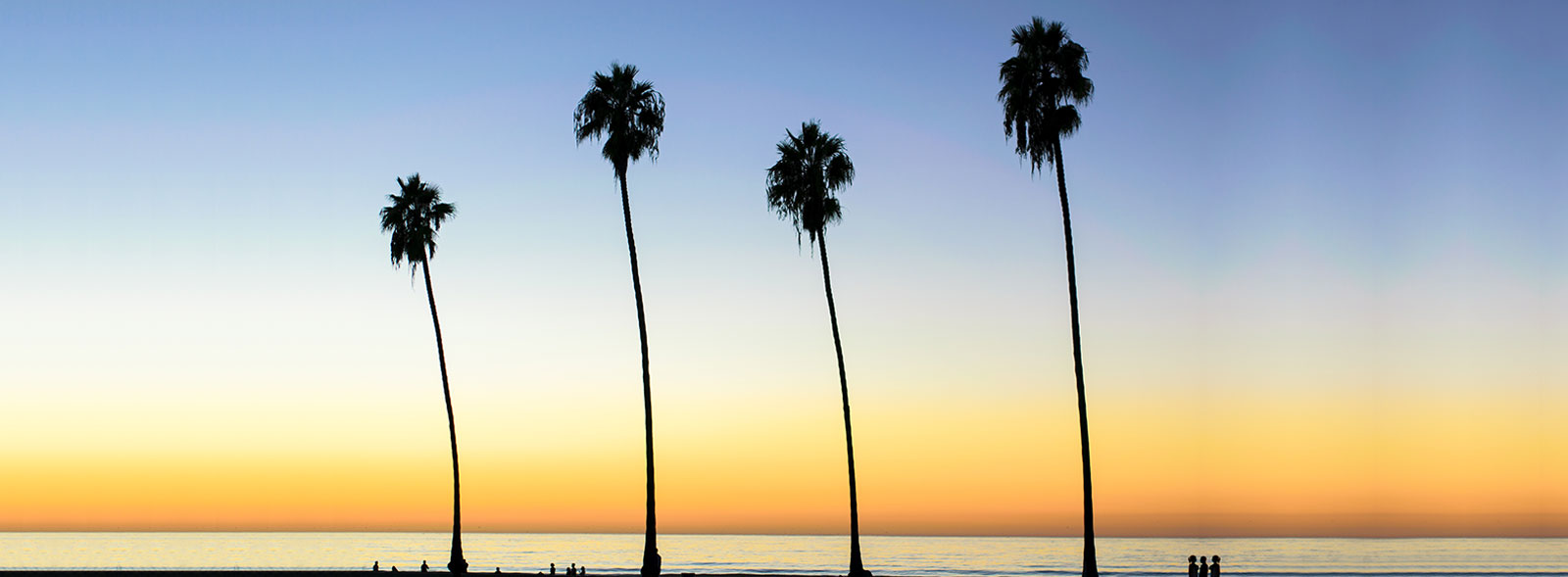 Four palm trees blowing in the breeze in front of the La Jolla Shores beach and ocean with a golden sunset in the background